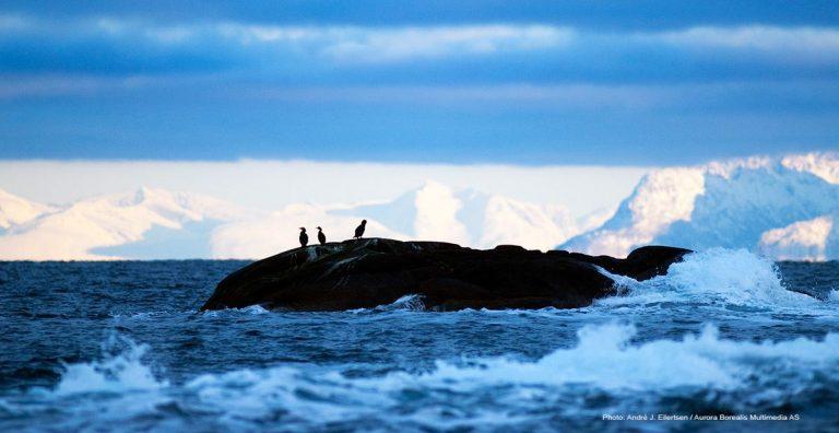 Vestfjorden