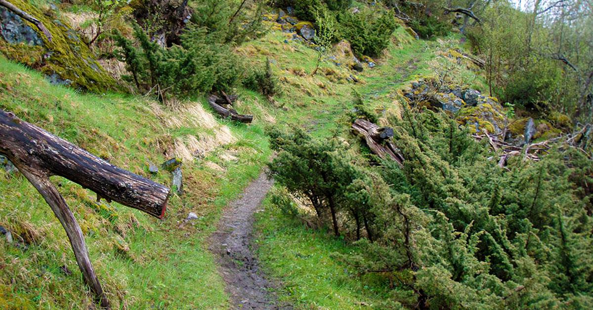 Stien opp til Rangeldalen ved Laukvik