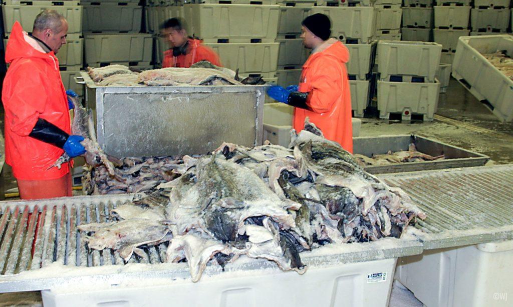 arbeidere-som-palleterer-saltfisk